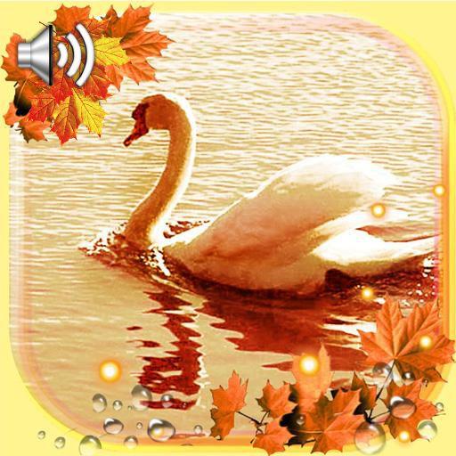 Autumn Swans Live Wallpaper