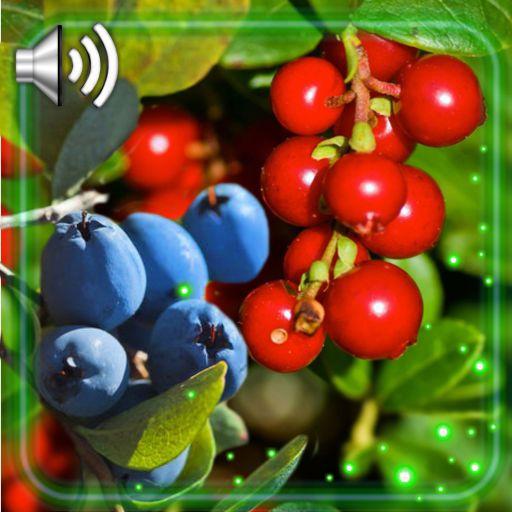 Berries Wild Live Wallpaper