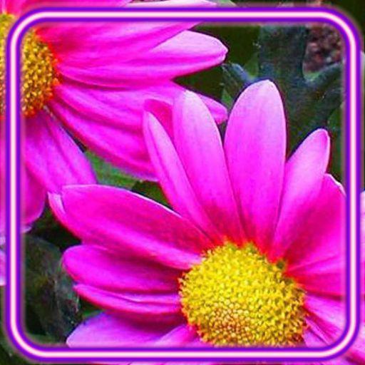 Flowers Summer Live Wallpaper