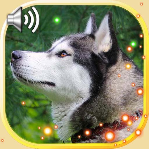 Husky Sounds Live Wallpaper