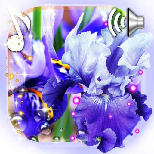 Iris Free Live Wallpaper