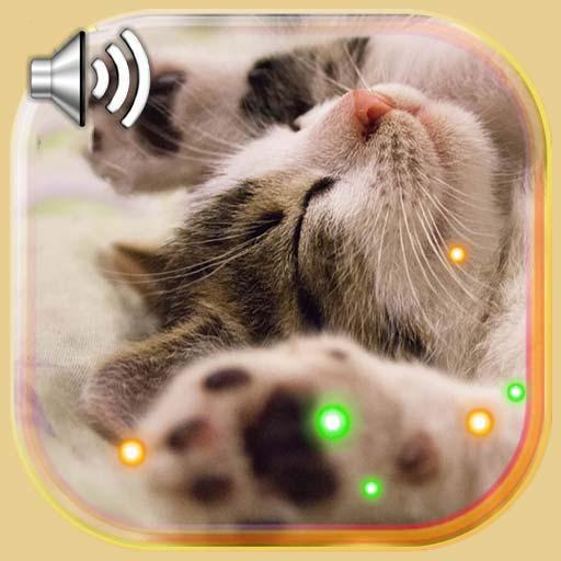 Kitty Songs LWP