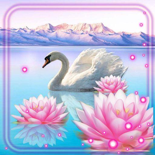 Lotus and Swan Live Wallpaper