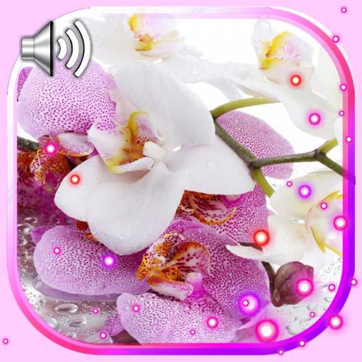 Orchids Best LWP