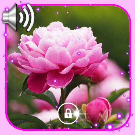 Peony Nice Flowers Live Wallpaper