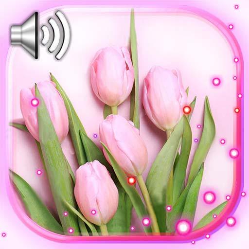 Springs Tulips Live Wallpaper