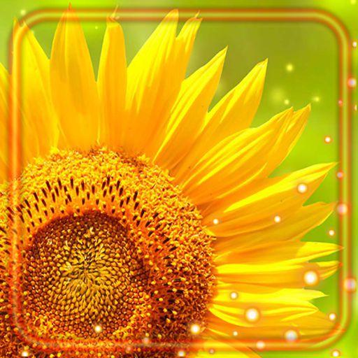 Summer Sunflowers Live Wallpaper