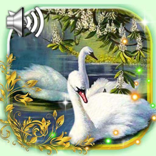 Swans Live Wallpaper