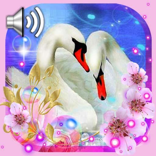 Swans Songs